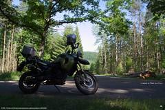 Zwischenstopp im Wald