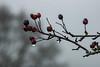 Shades Of Grey (ianbonnell) Tags: billinge monochrome blackandwhite winter