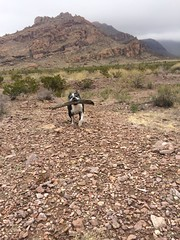 Memory of My Sweet Girl (garlandcannon) Tags: dogcarryingstick mountainous