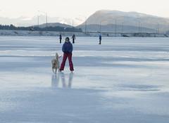 _TRW7491 Simba pulling Anna (terrificphotos) Tags: juneauaalaska twinlakes dogs frost trees raven evergreen icecrystals hockey