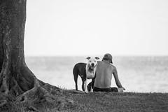 Somewhere in April Time (Thomas Hawk) Tags: hawaii maui wailea bw dog fav10 fav25