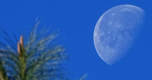 Lluna blava matinera