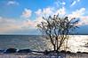 DSC_8260 (kaweyka) Tags: see bodensee wasser sonnenlicht baum romanshorn schweiz wolken