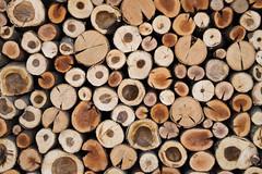 January 2 2017 (2 / 365) (Joe Alcorn) Tags: wood lumber crosssection