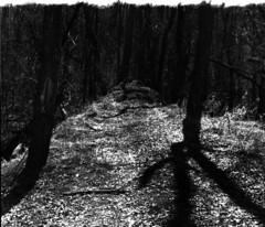 (|Digital|Denial|) Tags: cemetery swamp blackandwhite noir rangefinder minolta himatic7s contrast dark moody gloomy trees sky silhouette shadows