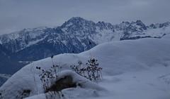 hiver (bulbocode909) Tags: valais suisse branson fully montagnes nature hiver neige