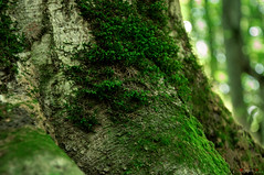 Tree in the forest (aniribe) Tags: tree forest nikon green moss details color nature earthnaturelife natureimagies naturephotos autumn closeup forestimages