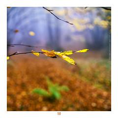 ETR PHOTOGRAPHY  ERSİN TÜRK - ETR0053 (ETR | Ersin Türk) Tags: landscape detay detail bolu abant ekim 2016 leaf ersintürk etrfotograf etr minimal minimalist forest