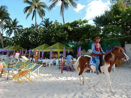 Horse #8 on Beach