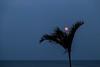 Buck Moon (182/365) (aka Buddy) Tags: ocean summer moon tree nj palm atlantic full og buck day182 seabright 2015 day182365 365the2015edition 3652015 1jul15