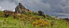 15 - Sur le chemin des crtes, un roc'h (LOUIS TOSSER) Tags: france fleurs bretagne pierres paysages monts finistre calvaire mgalithe darre commana