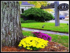 Fletcher Street Flowers Around Tree - Photo by STEVEN CHATEAUNEUF - April 27, 2015 - This Photo Was Changed To A Horizontal Version On July 26, 2015 by STEVEN CHATEAUNEUF (snc145) Tags: roof brown house green texture colors beautiful car sign yellow horizontal outdoors photo spring colorful pretty seasons purple bright vivid sidewalk treetrunk bark bold greengrass editedimage flowerbushes stevenchateauneuf april272015
