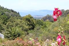 IMG_4598 (cheryl's pix) Tags: california berkeley botanicgarden botanicalgardens botanicalgarden botanicgardens berkeleyca berkeleybotanicalgarden ucbotanicalgarden universityofcaliforniabotanicalgarden universityofcaliforniabotanicalgardenatberkeley