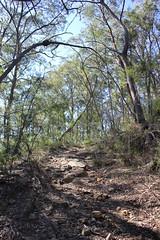 Great North Walk (cathm2) Tags: travel nature walking hiking australia nsw centralcoast greatnorthwalk
