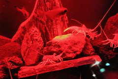THE SHRIMPS (PINOY PHOTOGRAPHER) Tags: orakei kellytartlon sealife aquarium auckland newzealand world