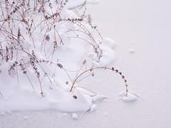 Foxboro Cranberry Bogs 11 (dennisgg2002) Tags: foxboro massachusetts ma cranberry bogs winter new england snow landscapes