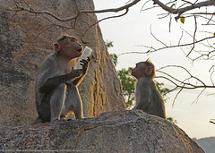 """SAY 'NO' TO PLASTIC, MY SON !"" (GOPAN G. NAIR [ GOPS Photography ]) Tags: gopsorg gops gopsphotography gopangnair gopan plastic pollution monkey dad son nature save environment"
