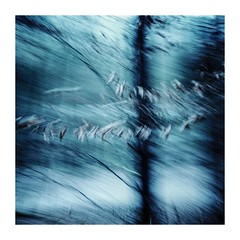 leavestwist (seba0815) Tags: ricohgrdiv grdiv bleachbypass nature woods forest tree leaves twist dancing turning blurred icm mood moved square light dark blue seba0815 walk winter atmosphere melancholy abstract blur