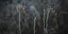 rauhreif 6673 (s.alt) Tags: frost detail frozen eiskristall icecrystal frozennature nature natureunveiled winter ice rauhreif cold kalt morgen kristallförmig vereist niederschlag hoarfrost whitefrost rime frostyrime macro blatt leaf leaves
