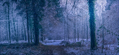 Winter Panorama (HikerandBiker) Tags: forest ilca99m2 outdoor panorama schnee sigma2470mmf28exdghsm snow sony sonya99ii sonyalpha99ii wald walk winter wood