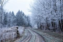 Bevroren mist Lelystad