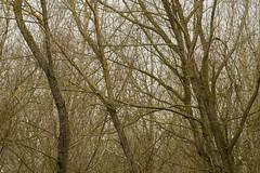 20170104-_IMG0953-Edit (fleetingphotons) Tags: pentaxk1 smcpentaxa200mmf28ed wasingestate fishing warrenbeat kennet trees