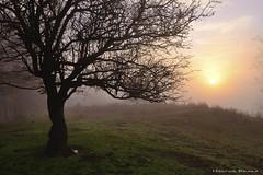 The magic of the moment (Hector Prada) Tags: tree forest sunrise sun light composition winter fog mist magic nature morning freedom arbol nosque amanecer sol luz invierno niebla magia momento moment hectorprada d610