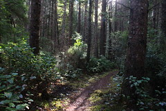 Sunlight slanted through the forest as we hiked to Sunset Bay (rozoneill) Tags: bastendorff beach bog trail sunset bay state park coos jetty charleston oregon coast oct hiking