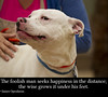 Happy Dog (Transient Eternal) Tags: dogs dog pitbull canine friend wiseman quotes happiness happy content