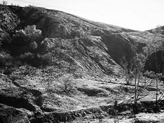 Little Tujunga Canyon, Los Angeles Another in a series of shots from the Little Tujunga Canyon Burn area. #nature #outdoors #burn #mountains #landscape #LA #losangeles #ig_losangeles #wheream_I_LA #insta_losangeles #cali_grammers #lagrammers #losangelesgr (dewelch) Tags: ifttt instagram little tujunga canyon los angeles another series shots from burn area nature outdoors mountains landscape la losangeles iglosangeles whereamila instalosangeles caligrammers lagrammers losangelesgrammers discoverla conquerla unlimitedlosangeles californiacaptures uglagrammers blackandwhite blackandwhitephotography bnwdrama bnwlegit bnwcaptures gfbnw bnwmaster ignaturelovers ignaturepictures ignaturesbest 24earth