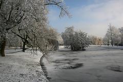 winter wonderland (hjvandervegt) Tags: 2017 nederland netherlands holland kampen overijssel winter landschap landscape snow sneeuw wit white boom tree