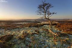 [Explored] Early frost at Broomber Rigg, Upper Wensleydale, Yorkshire Dales National Park. UK (Wend's photography) Tags: atmosphere boomer rigg dales england gb heather heath moors landscape moorland outdoor rural scenery sunrise sunlight dawn photography trees uk unitedkingdom wensleydale yorkshire yorkshiredales wendsphotography