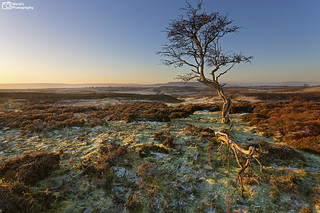 [Explored] Early frost at Broomber Rigg, Upper Wensleydale, Yorkshire Dales National Park. UK