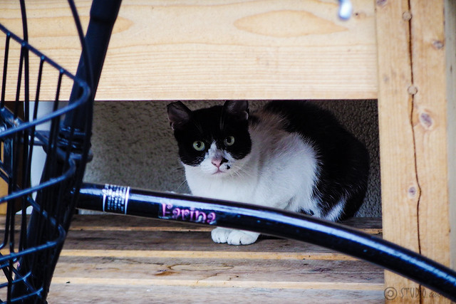 Today's Cat@2015-07-01