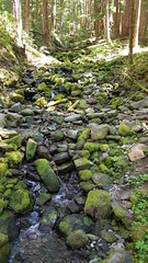 Tributary Stream and moss-covered rocks