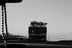 Camel Road Trip