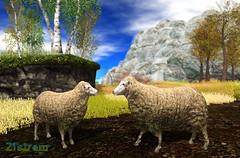 Mommy and Daddy Sheep - Free Gift (zuza ritt) Tags: animal garden sheep mesh gardening farm secondlife lamb materials virtualworld virtualgarden kitely virtualanimal digitalgarden opensimulator oepnsim