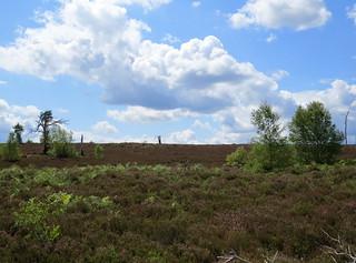 Shrike Hill - Thursley