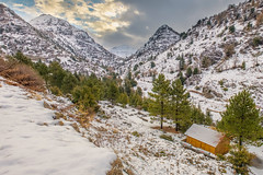 Ehmej Cedars - Jbeil (ramzisemrani) Tags: ehmej cedars lebanon liban jbeil byblos snow winter 2016 white mountains mountain tree trees maronites middleeast