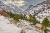Ehmej Cedars - Jbeil (ramzisemrani) Tags: ehmej cedars lebanon liban jbeil byblos snow winter 2016 white mountains mountain tree trees maronites middleeast