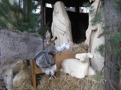 8 (markusfaber) Tags: weihnachtsgeschichte esel