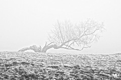l'arbre fendue DxOFP RolleiOrtho25_DSF2833 (mich53 - thank you for your comments and 5M view) Tags: givre froid hiver saisons campagne solitude brouillard brume arbres monochrome « noir blanc » explore arbre mort couché silhouette fujifilm xt1 xf1655mmf28rlmwr frosted cold winter seasons campaign fog mist trees blackwhite deadtree lyingtree frost kalt jahreszeiten kampagne einsamkeit nebel bäume einfarbig explores toterbaum fallentree helada frío invierno temporadas campaña soledad niebla árboles monocromo blancoynegro explora árbolmuerto árbolcaído silueta îledefrance mantois 4winter 霜 冷たいです 冬 季節