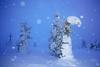 of monsters and trees (Sandra Bartocha) Tags: sandrabartocha finland trees riisitunturi snow winter