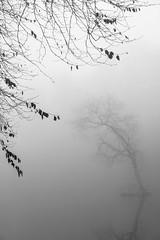 Trees (Tom_Drysdale) Tags: single freezing queensferry mist xt2 lake fujifilm estate loch leaves january 2017 tree south dundas beech fuji gloom fog island lone pond ice