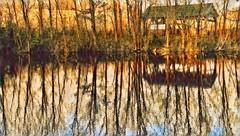 Longwood Gardens (mark.aizenberg) Tags: nature park philadelphia landscape house winter reflection trees gardens river water