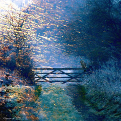 Tentative fingers of early morning sunlight (Lemon~art) Tags: path country gate sunlight owl manipulation texture fog mist lane rural fantasy