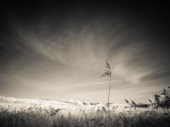 Windswept (kckelleher11) Tags: 1450mm 2016 720nm ep2 ir ireland kildare leica olympus bw black december f2835 fen infrared newbridge panasonic white wind windswept
