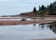 Room for all (halifaxlight) Tags: canada princeedwardisland teahillbeach beach sea tidalpools figures seated trees summer reflections cliffs