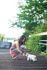 feed tan b (ceci cheung) Tags: yorkie yorkshireterrier tanji toronto me