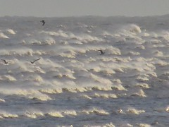 7025 White Horses (Andy - Busyyyyyyyyy) Tags: 20170113 birds kent littlestoneonsea sea spume sss waves whitehorses www